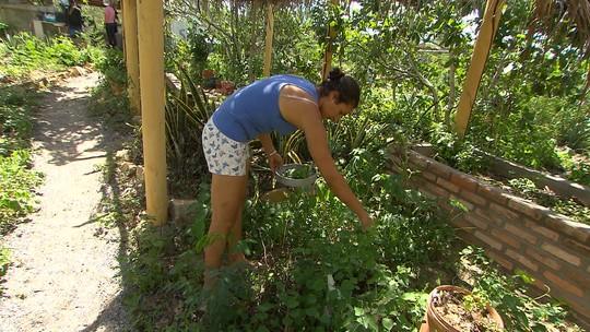 Permacultura cria um oásis no sertão de Tucano