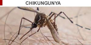 selo chikungunya  (Foto: Douglas Aby Saber/Fotoarena-AFP Photo/EID Mediterranee)