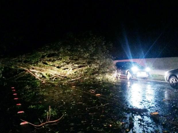 Árvores cairam em Herval D'Oeste com a força do vento (Foto: Eduardo Cristofoli/RBS TV)