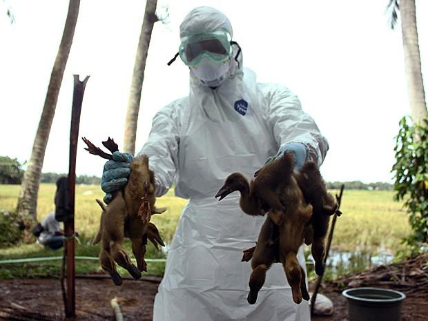 Autoridades de saúde da Indonésia matam patos contaminados pela gripe aviária (Foto: Rivo Andries/AP)