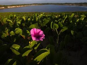 Parque Nacional de Restinga de Jurubatiba (Foto: Romulo Campos/Arquivo pessoal)
