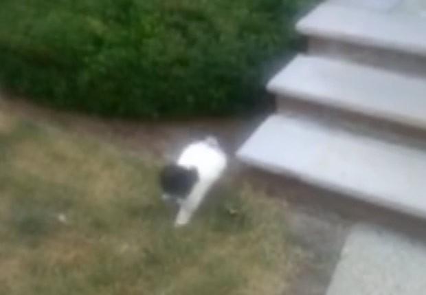 Após sair de planta, cachorro caminhou até seu dono (Foto: Reprodução/LiveLeak/Dcmfox)