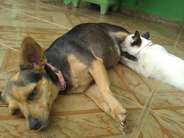 Mel amamenta a gata Bella (Foto: Paula Casagrande/G1)