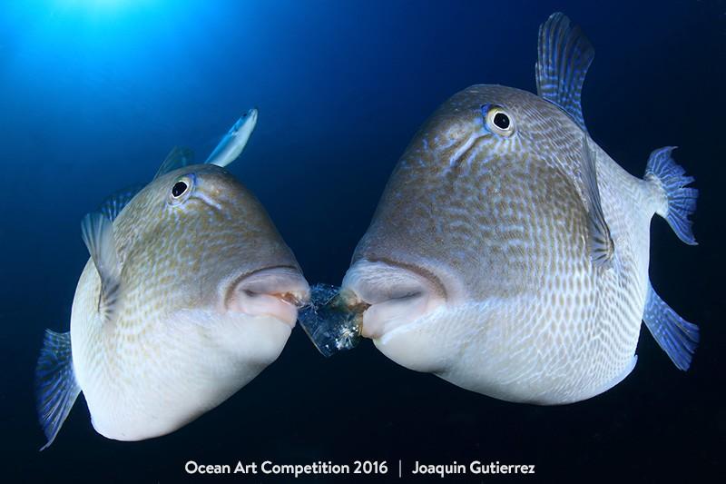 Categoria 'retrato', vencida por Joaquin Gutierrez (Foto: Joaquin Gutierrez/Ocean Art Contest)