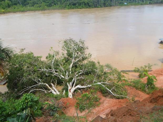 Árvore caiu e matou criação de aves (Foto: Adelcimar Carvalho/G1)