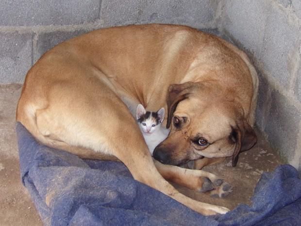 Cadela adota e protege filhote de gato em Vargem Grande Paulista, SP (Foto: Adelaide Lopes Rodrigues/VC no G1)