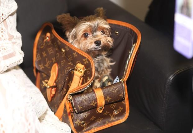 Cachorrinho de Lea T no SPFW (Foto: Iwi Onodera / EGO)