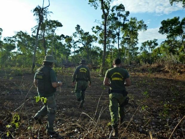 Operação Pequiá em Mato Grosso embargou mais de 3 mil hectares desmatados no leste de Mato Grosso (Foto: Hebert Rondon/Ibama)