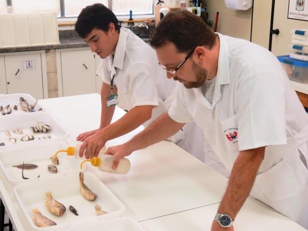 Pesquisadores de Santos encontraram novas espécies no estuário  (Foto: Orion Pires / G1)