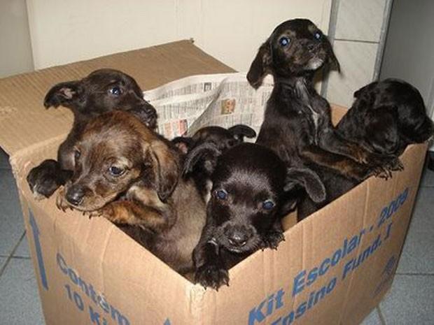 Animais foram encontrados em situação de abandono e maus tratos (Foto: Divulgação)