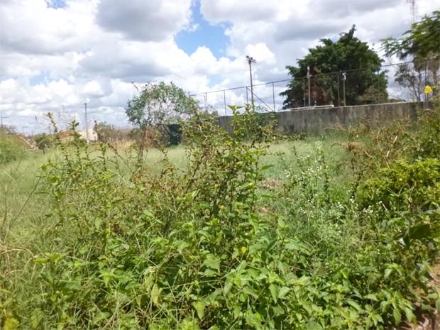 Terreno está localizado no bairro Jardim Paraíso em São Joaquim da Barra (Foto: Thiago Martins da Silva/ VC no G1)