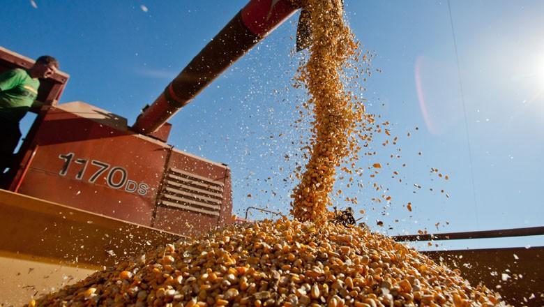 milho-colheita-graos (Foto: Pedro Revillion/Palácio Piratini)
