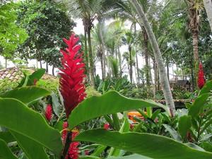 Plantas e árvores nativas que ficam em torno das praias são preservadas (Foto: Mariane Rossi/G1)