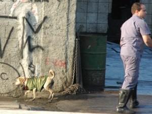 Depois do salvamento, o animal permaneceu na rua, diz leitor.  (Foto: Marcus Vinicius Morbin/VC no G1)