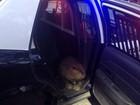 Castor perdido ganha carona em viatura da polícia nos EUA