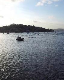 Poluição da baía de Guanabara