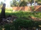 Apesar dos alertas sobre o Aedes, 234 terrenos estão abandonados na capital