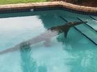 Lista reúne ursos, crocodilo, canguru e até guaxinim 'curtindo' piscina