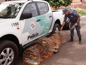 Polícia Ambiental encontrou dez pássaros em cativeiro (Foto: Polícia Ambiental/ Divulgação)