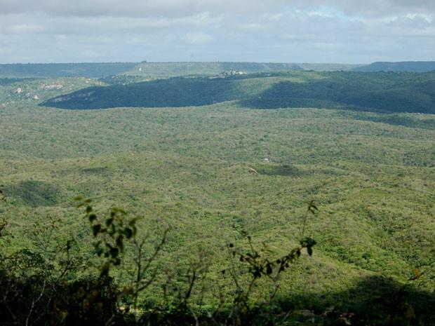 Região de Caatinga no Nordeste do Brasil. Bioma é habitat do tatu-bola. (Foto: Divulgação/Mauro Pichorim)