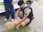Após ter sido enforcada pelo dono e dada como morta, cadela aparece viva