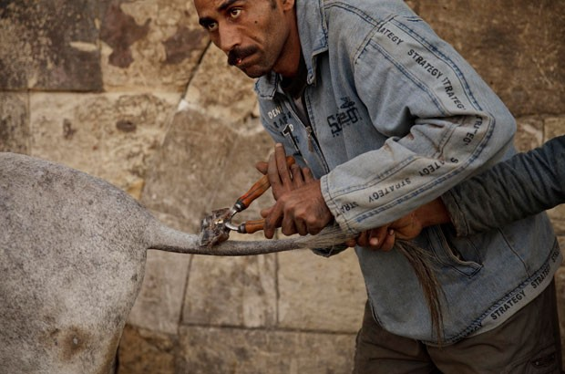Mohamed Mustafa herdou de seu pai uma profissão curiosa (Foto: Maya Alleruzzo/AP)