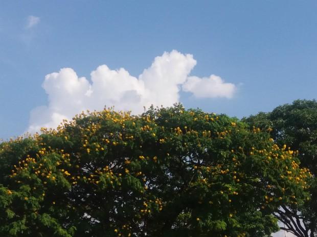 Inmet prevê tempo parcialmente nublado em Campo Grande nesta segunda-feira (Foto: Anderson Viegas/G1 MS)