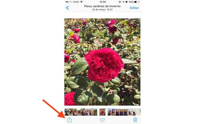 Depois de escolher a(s) foto(s) que você deseja imprimir, clique no botão de compartilhar (Foto: Gabriella Fiszman/ TechTudo)