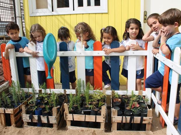 Os alunos desta escola acompanham de perto o crescimento das mudas (Foto: Divulgação)