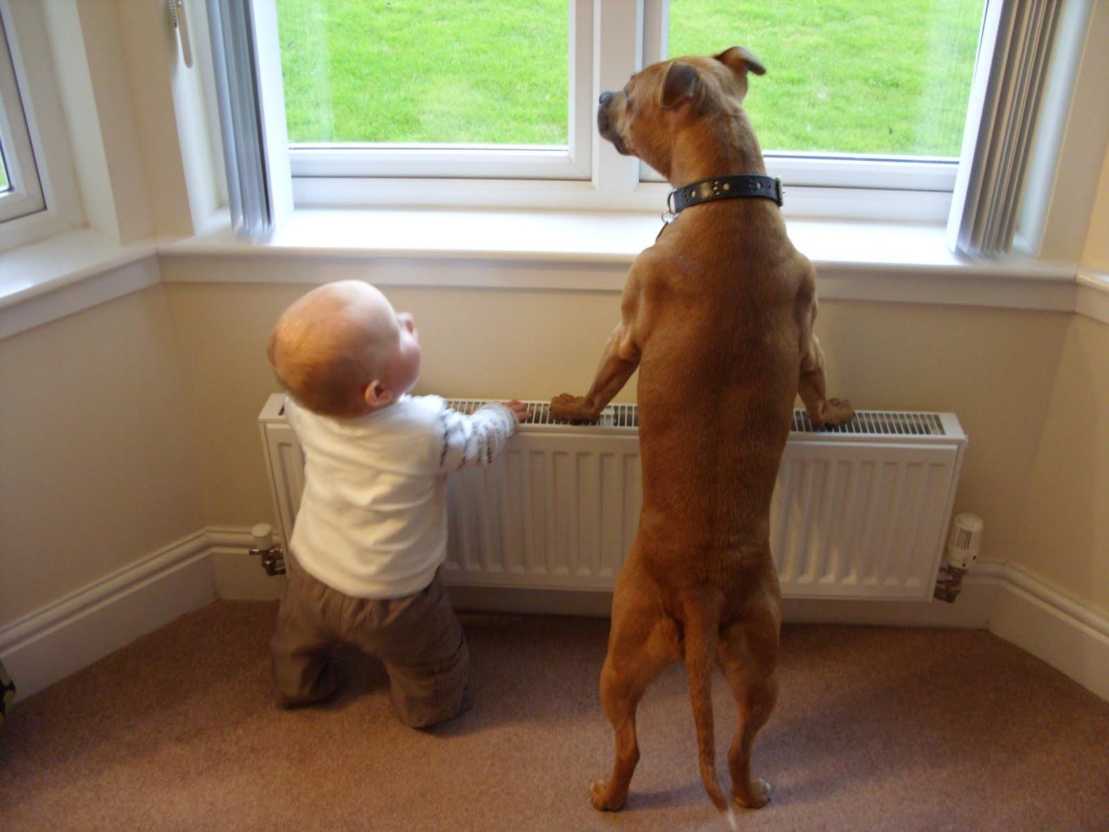 Pesquisa sugere que sentimentos para cães seja similar ao dos filhos (Foto: Reprodução)