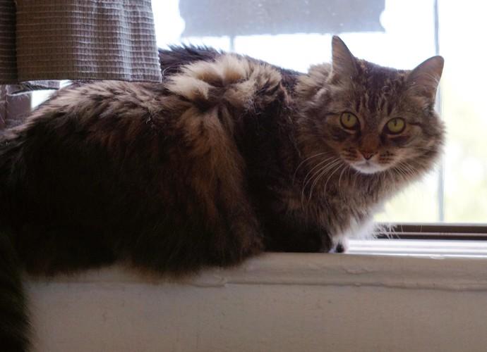 Gato angorá na janela  (Foto: D Medina / Divulgação )
