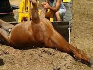Cavalo morreu eletrocutado em parque de exposições no Espírito Santo (Foto: Foto-leitor/ A Gazeta)