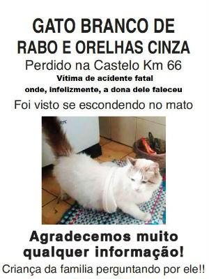 Família procura por gato que desapareceu após acidente grave em Mairinque (Foto: Divulgação)