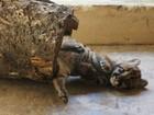 Filhote de onça parda é encontrado em estrada no interior de Rondônia