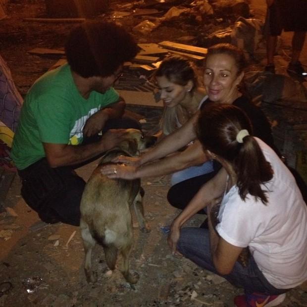 Eles distribuíram ração e fizeram exames nos animais (Foto: Divulgação)