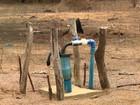 Agricultura biossalina permite usar água salobra na irrigação de pequenas áreas