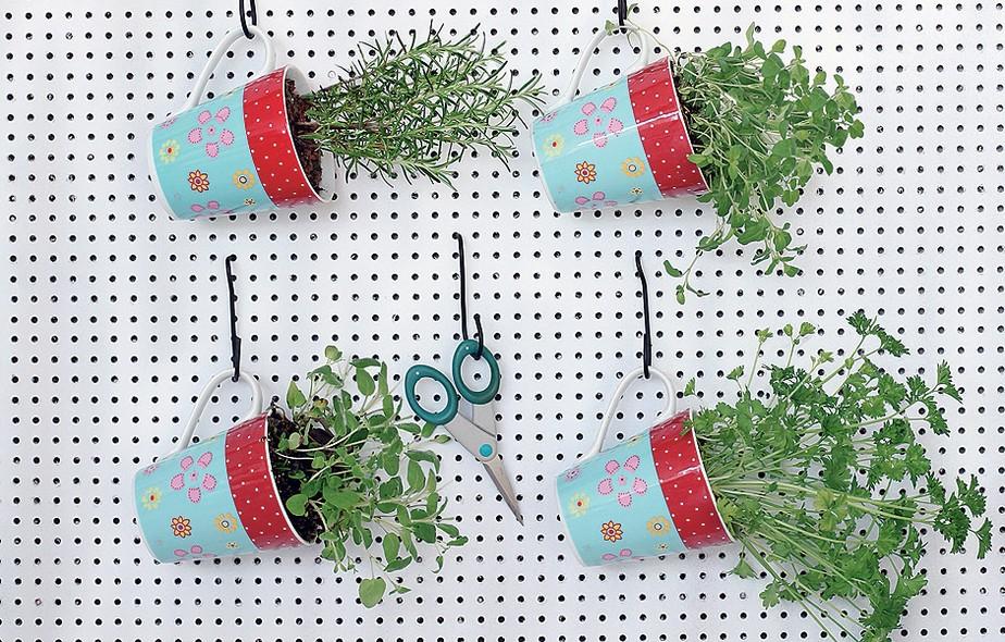 mini jardim de temperos : mini jardim de temperos: dar de lembrança: mini-horta portátil de ervas plantadas em canecas