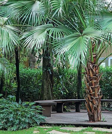 O banco em meia-lua aproveita a sombra das palmeiras-leque. Na lateral esq., maciço de guaimbês (Foto: Raphael Briest/Divulgação)