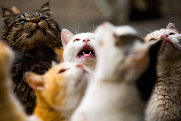 População de felinos seis vezes maior do que de humanos (Foto: Thomas Peter/Reuters)