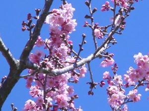 20ª Festa da Cerejeira é atração em Itapetininga. (Foto: Divulgação)