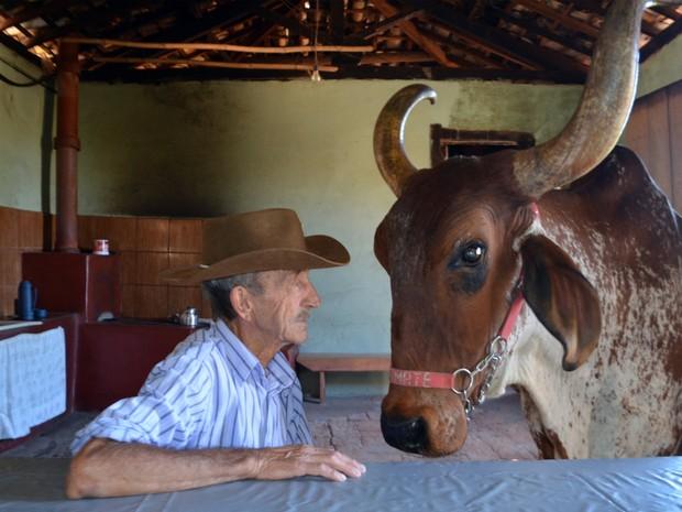 Seu Tião e o boi Tomate na cozinha da fazenda em São Tiago (Foto: Samantha Silva / G1)