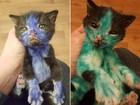 Veja gatinhos 'Smurf e Shrek' e mais animais pintados