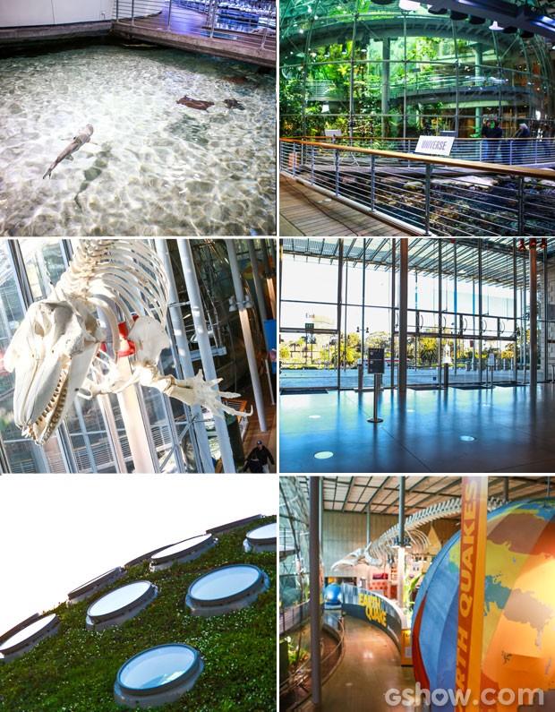 O museu é composto por áreas muito originais como um aquário que abriga tubarões, planetário, além de galerias exposição  (Foto: Aline Kras/TV Globo)