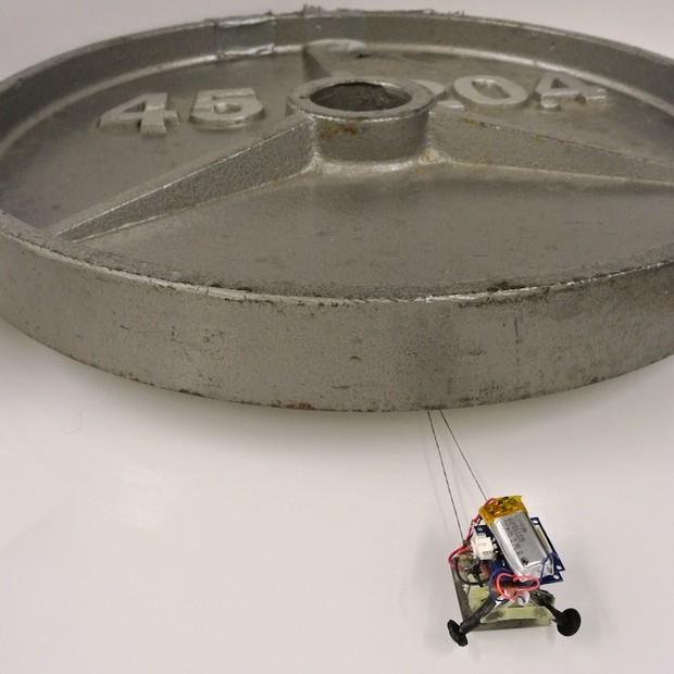 Micro robôs são capazes de carregar até 2 mil vezes seu peso
