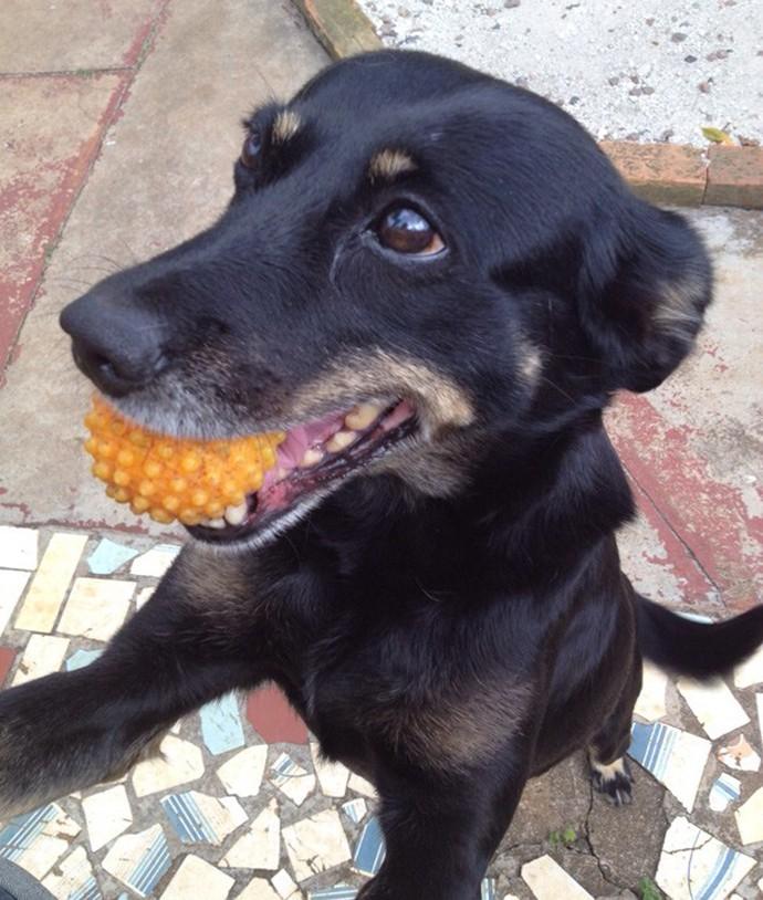 A Pitchula adora brincar com a bolinha (Foto: Arquivo Pessoal)