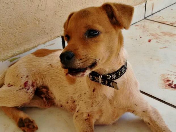 Cãozinho vivia nas ruas e foi resgatado por moradora no domingo (31) (Foto: Natanny Carla/Arquivo Pessoal)