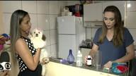 Dica da Lucy: aprenda a fazer repelente caseiro para evitar que cães façam xixi pela casa