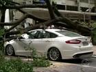 Ventos de 60 km/h derrubam árvores durante temporal no Sul do Rio