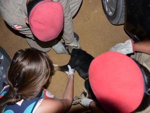 Animal foi atendido por uma veterinária da região (Foto: Anderson Oliveira/Blog do Anderson)