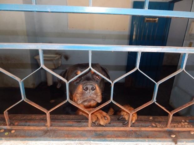Empresa mudou de lugar e cachorros ficaram na gráfica para manter a segurança (Foto: Divulgação/Polícia Ambiental)